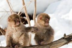 Macaque japonais Image libre de droits