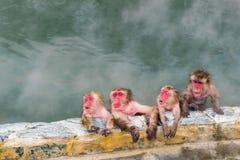 Macaque japonais de singe de neige dans Sur-sénateur de source thermale, Hakodate, Japon Image stock