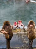 Macaque japonais de singe de neige dans Sur-sénateur de source thermale, Hakodate, Japon Photo libre de droits