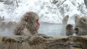 Macaque japonais en source thermale Photos stock