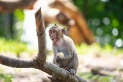 macaque Long-coupé la queue, en Thaïlande, Saraburi une réserve naturelle, Image libre de droits
