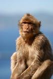 Macaque met hemel en oceaanbac Royalty-vrije Stock Foto's