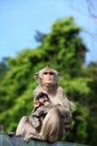 Macaque met lange staart met haar zoete baby. Stock Fotografie