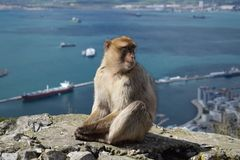 Monkey with a view stock photo