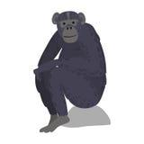Macaque monkey rare animal vector. Royalty Free Stock Photo