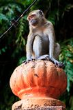Macaque monkey sitting on a pole Stock Photography