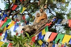 Macaque monkey on a tree in a Swayambhunath Stupa, Kathmandu, Ne Stock Image