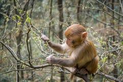 Macaque monkey 4 Stock Photos