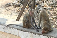Macaque Monkies at Khao Luang Cave in Petchaburi, Thailand royalty free stock photography