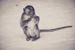 Macaque muito novo perdido em uma praia de Tailândia imagem de stock royalty free