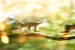 Macaque no movimento foto de stock royalty free