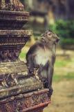 Macaque no templo da caverna do tigre, Krabi, Tailândia imagens de stock