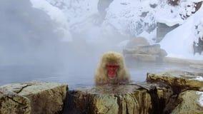 Macaque o mono japonés de la nieve en aguas termales almacen de video