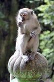 Macaque på trappan som leder till Batu grottor Arkivfoton