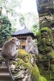 Macaque que senta-se na estátua velha perto do templo hindu, floresta do macaco de Ubud fotos de stock
