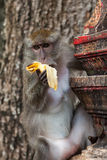 Macaque in the Tiger cave temple, Krabi Royalty Free Stock Image