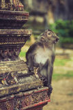 Macaque in the Tiger cave temple, Krabi, Thailand Stock Images