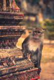 Macaque in the Tiger cave temple, Krabi, Thailand Stock Photo