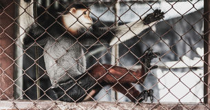 Macaque in a zoo cage Stock Photo