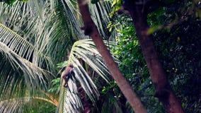 Macaqueaap in palm, Da Nang, Vietnam Royalty-vrije Stock Foto