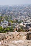 Macaquefallhammer, welche nach Erdnüssen in Jaipur sucht Lizenzfreie Stockfotos