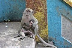 Macaquemodern och behandla som ett barn Royaltyfri Fotografi