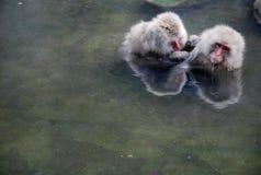 Macaques Stockfotografie