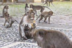 macaques Στοκ φωτογραφία με δικαίωμα ελεύθερης χρήσης