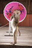 Macaques in circus fashion shows with an umbrellaThailand Phuket. Stock Photography