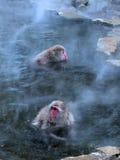 Macaques in hot spring. Japanese monkeys in natural hot spring at winter time, Nagano Japan Royalty Free Stock Photos