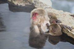 Macaques japonais : Une maman de sommeil et un bébé soignant Image libre de droits