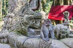 macaques Long-coupés la queue (fascicularis de Macaca) dans l'avant sacré de singe Photographie stock libre de droits