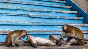 Macaques are playing stock photo