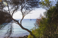 Macarella beach seen among the trees on a sunny morning, Minorca Royalty Free Stock Photos