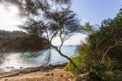Macarellastrand onder de bomen op een zonnige ochtend, Minorca wordt gezien die Stock Foto