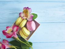 Color macaron biscuit in a box on a blue wooden background, confectionery alstroemeria flower Royalty Free Stock Photos