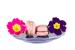 Macaron de la primavera Imágenes de archivo libres de regalías