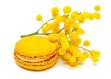 Macaron e mimosa Fotografia de Stock