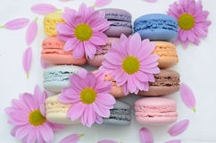 Macaron Stock Images