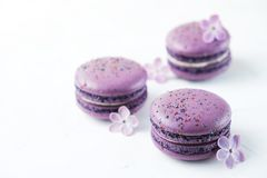 Macaron or macaroon french coockie on graphite background with purple flowers, pastel colors. Flat lay. Food concept. Tasty colorful macaroons in marble Royalty Free Stock Images