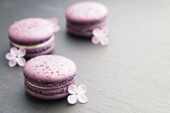 Macaron or macaroon french coockie on graphite background with purple flowers, pastel colors. Flat lay. Food concept. Tasty colorful macaroons in marble Stock Photography