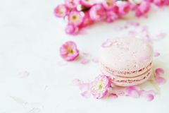 Macaron or macaroon french coockie on white textured with spring sakura flowers, pastel colors. Tasty colorful macaroons in marble background. Text space Royalty Free Stock Images
