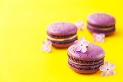 Macaron or macaroon french coockie on yellow background with purple flowers, pastel colors. Flat lay. Food concept. Tasty colorful macaroons in marble Royalty Free Stock Images