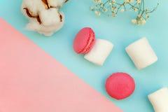 Macaron med marshmallower och bomull blommar på rosa färg- och blåttbakgrund Royaltyfria Bilder