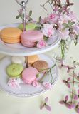 Macaron and pink roes Stock Photography