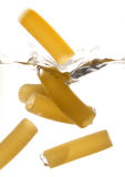 Macaroni. Jumping in the water Stock Images