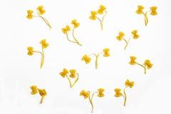 Macaroni flowers stock photography