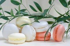Macarons färgade i pastellfärgade färger och grön växt Arkivfoto