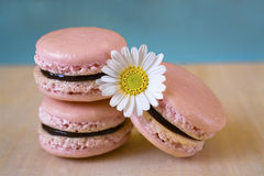 Macarons franceses com chocolate preto Fotos de Stock Royalty Free