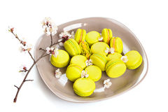 Macarons jaunes de plat, foyer sélectif Photo stock